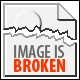 Seashells composition from auction April 2015