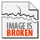 Seashells composition from auction September 2015