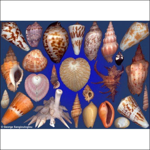 Seashells composition from auction January 2016