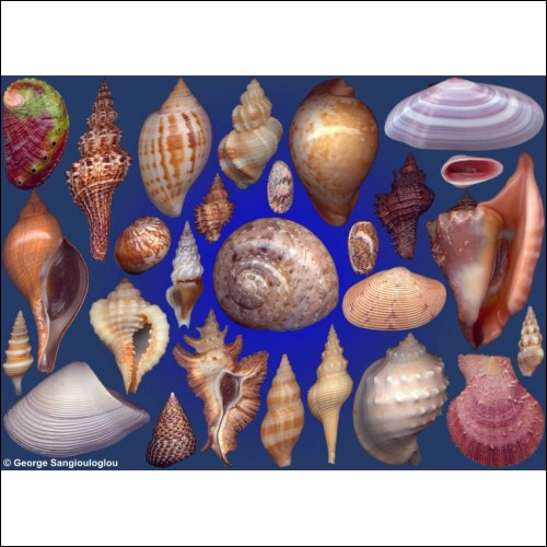 Seashells composition from auction April 2016