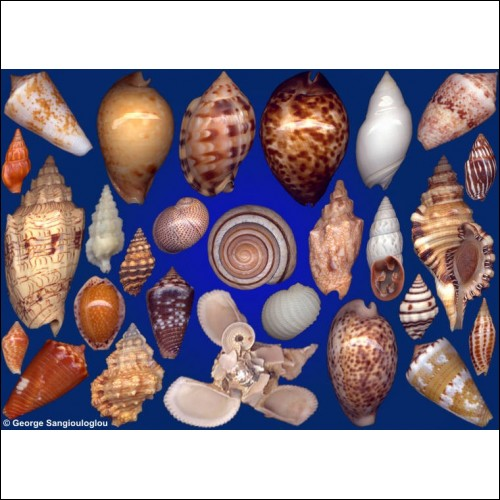 Seashells composition from auction October 2016