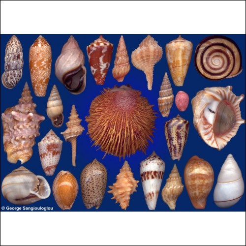 Seashells composition from auction March 2017