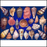 Seashells composition from auction August 2017