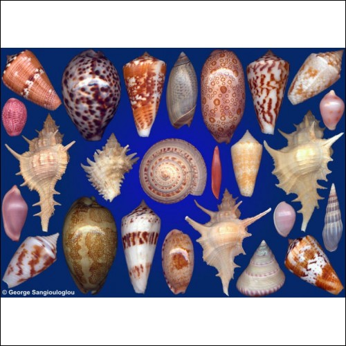 Seashells composition from auction October 2017