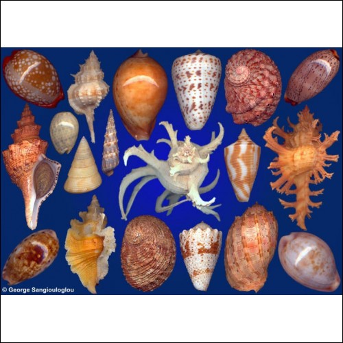 Seashells composition from auction November 2017