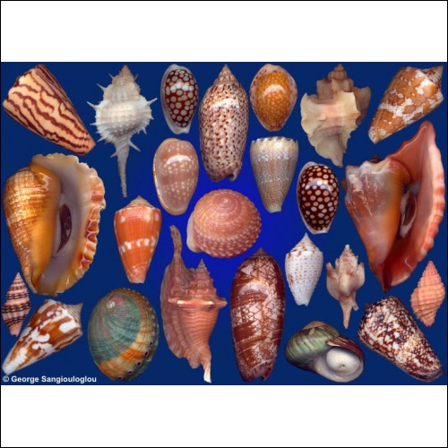Seashells composition from auction December 2017
