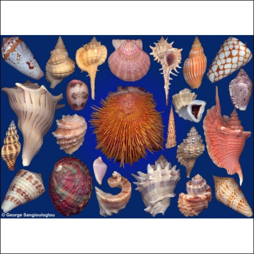 Seashells composition from auction March 2018