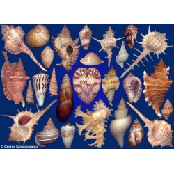 Seashells composition from auction June 2018