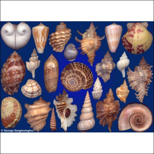 Seashells composition from auction August 2018