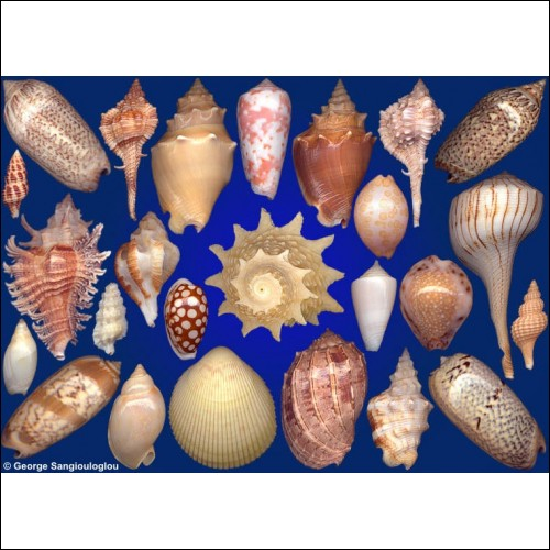 Seashells composition from auction September 2019