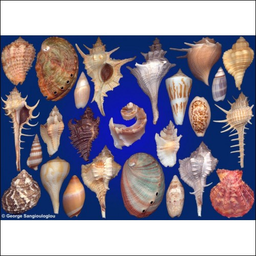 Seashells composition from auction October 2019