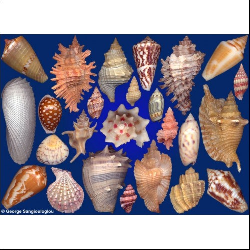 Seashells composition from auction November 2019