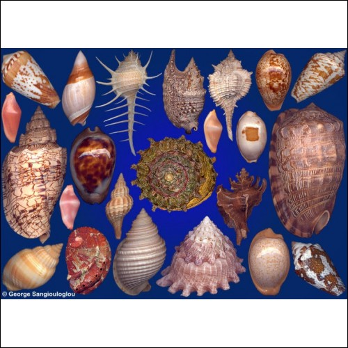 Seashells composition from auction February 2020