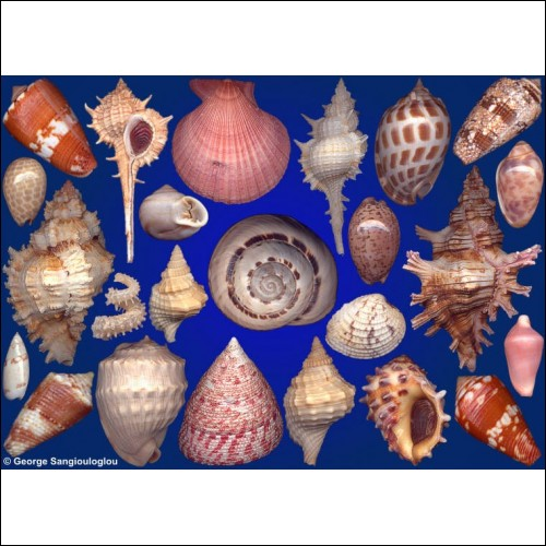 Seashells composition from auction April 2020