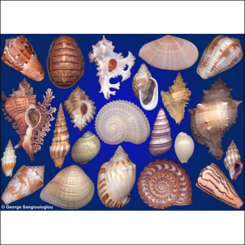 Seashells composition from auction May 2020